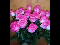 Bouquet de 19 roses rose